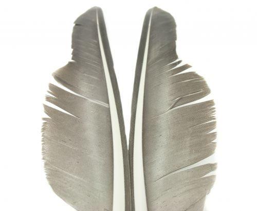 Nature's Spirit Canada Goose Biot Quill (Goose Quill Body)