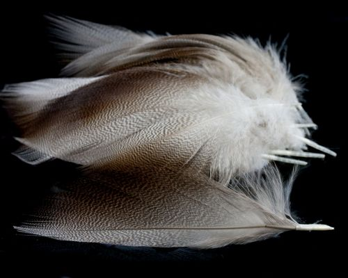 NATURE/'S SPIRIT 24 SELECT BRONZE MALLARD FEATHERS FLY TYING YOU PICK COLOR