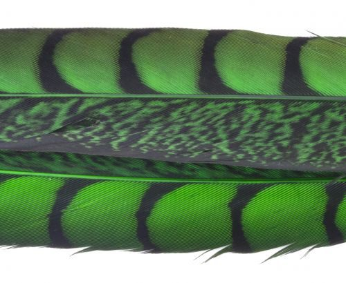 Nature's Spirit Dyed Lady Amherst Pheasant Tails