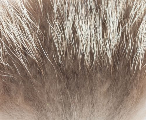 Nature's Spirit Raccoon Premium Wing Fur
